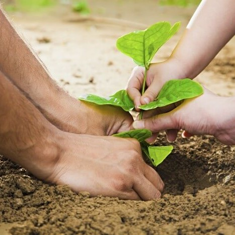 Conserve and Save your Greenery Event - 2